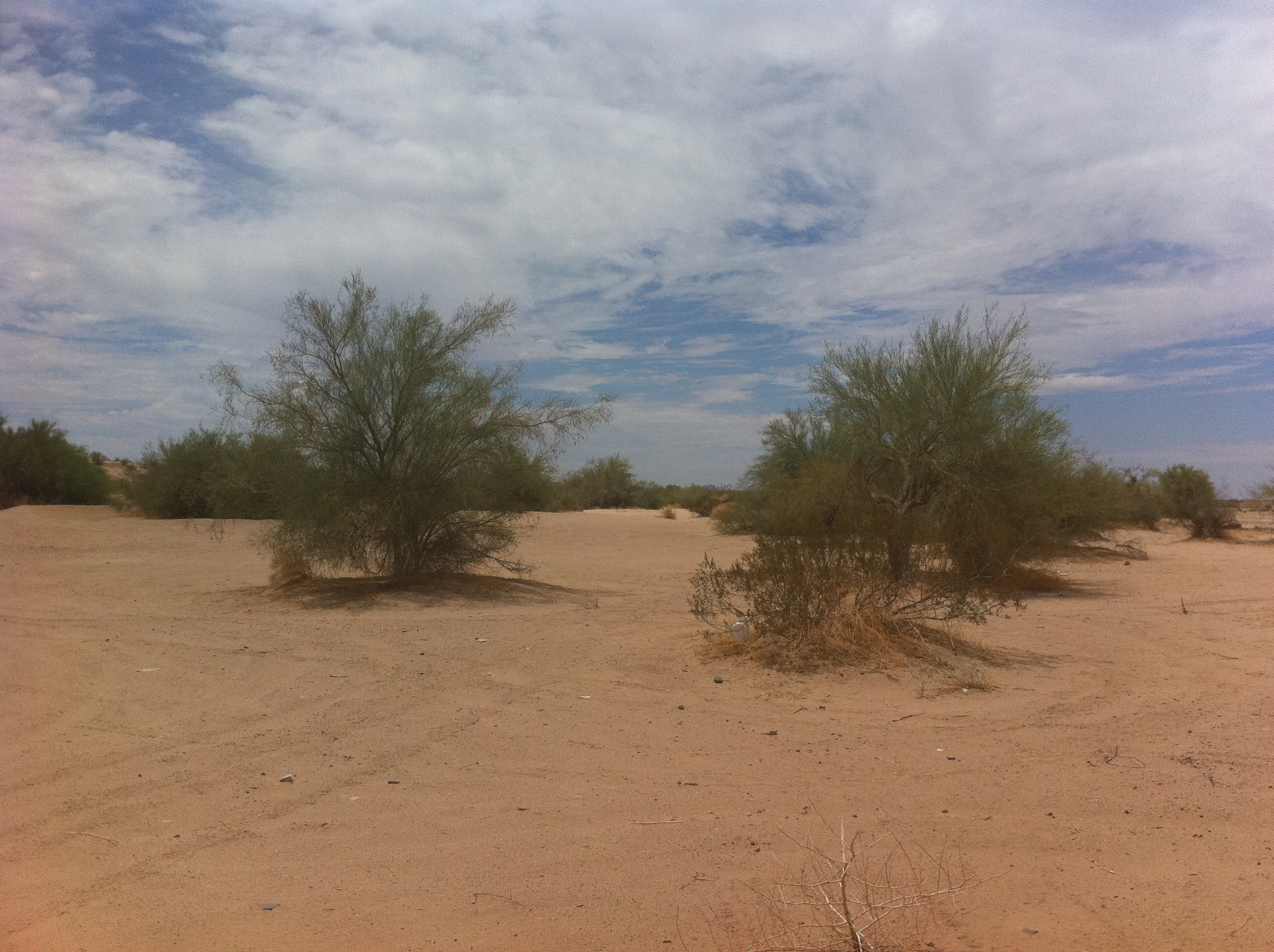 Day 78 – Desert Rose